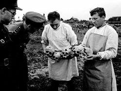 Des représentants de la Commission d'État extraordinaire (TchGK) examinent les crânes des victimes de la terreur nazie dans la ville d'Orel. Photo d'Arkady Chaïkhet. Archives de l'État russe de documents cinématographiques et photographiques (RGAKFD) / arch. N ° 0-171801